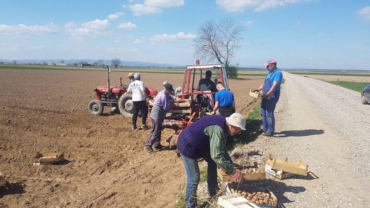 Kultivisanje vakufskih parcela u Janji