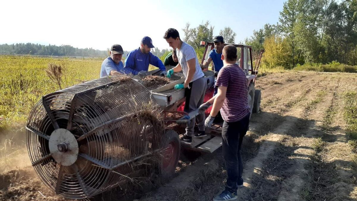 Unapređenje korištenja vakufske imovine: Medžlis Janja prikupio oko 70 tona krompira