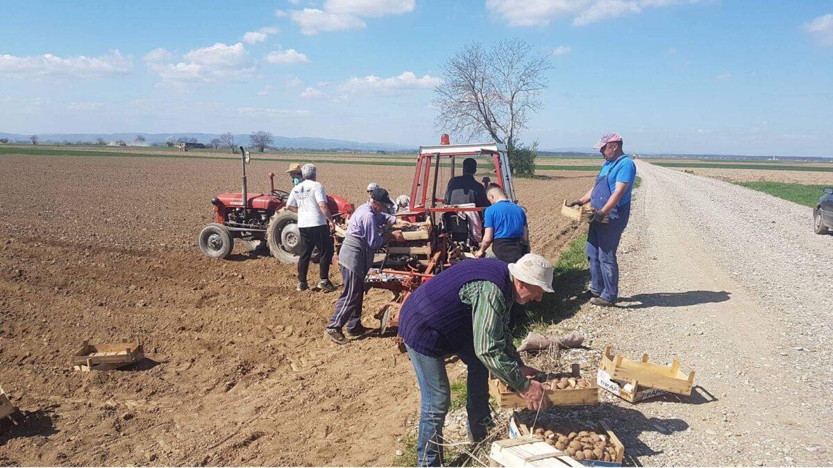 MIZ Janja: Izuzetni poljoprivredni prinosi sa vakufskih parcela