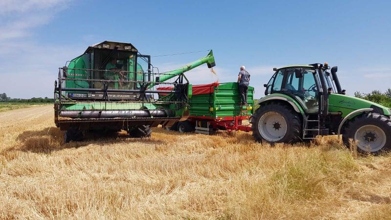Završena žetva pšenice na vakufskim parcelama u Janji