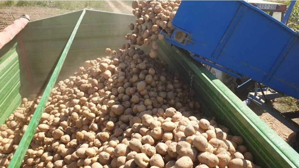 MIZ Janja: Prinos od 110 tona krompira s vakufskih parcela